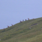 deer, south uist, western isles, scotlan, latent lifestyle, destination, guide