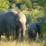 elephant, kruger park, south africa, latent lifestyle, destination, guide