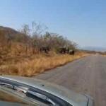 Elephant, kruger park, latent lifestyle, destination, guide, south africa