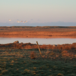 Geese, South Uist, western isles, scotland, latent lifestyle, destination guide