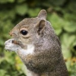 Squirrel, act anyway, latent lifestyle, minimalist, minimalism