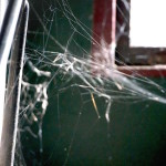 Spider web, latent lifestyle, act anyway, stuff, store